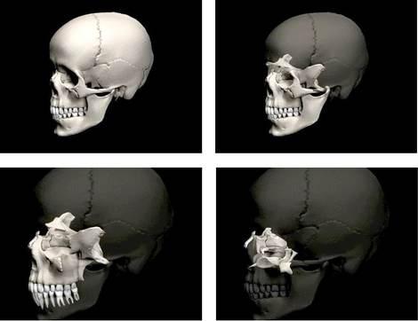 09-a-schede-ico-omnia-medicina-cranio-sequenza
