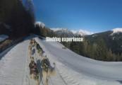 sleddog travel experience inlombardia